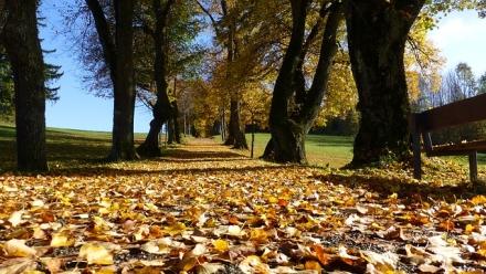 Speel-Mee-Maandag: De herfst